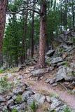 Slingan spolar upp till och med skog arkivbilder