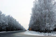Slingavinterträd som planteras på kanterna av vägen royaltyfri bild