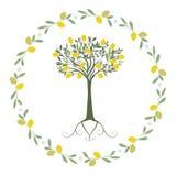 Slinger van bladeren, citroen en oranje bloesems met citroen binnen boom royalty-vrije illustratie