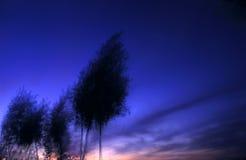 Slingerende bomen bij schemer Stock Afbeeldingen
