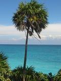Slingerende Palm Stock Afbeelding