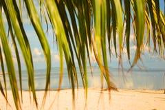 Slingerende palmen Royalty-vrije Stock Foto