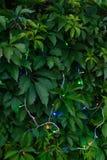 Slingers op groene bladeren Stock Afbeelding
