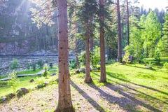 Slingor i ett near vatten för skog kall i landshotell arkivbild