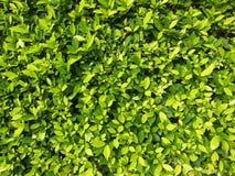 slingra sig växter Royaltyfri Bild