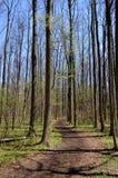 Slingrig bana i skog Royaltyfri Fotografi