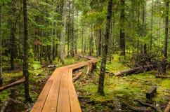 Slingrig gångbana i en skog Arkivbild