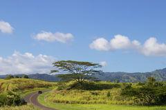 Slingrig gata Kauai Arkivfoton