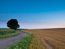 Slingrig landsväg Royaltyfri Bild