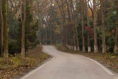 Slingrig skogväg Arkivbild