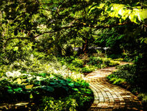 Slingrig trädgårds- bana Arkivbilder
