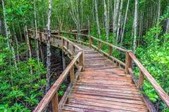 Slingrig trägångbana och överflödande mangroveskog Royaltyfria Bilder