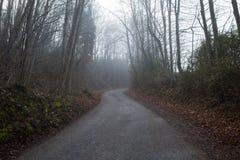 Slingrig väg i skog Royaltyfri Foto