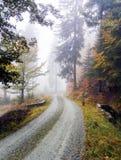 Slingrig väg i skogen Fotografering för Bildbyråer