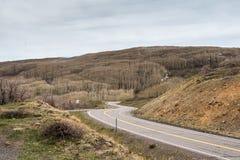 Slingrig väg till och med en Aspen Forest Arkivbilder