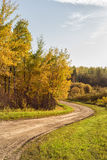 Slingrig väg till och med skog Fotografering för Bildbyråer