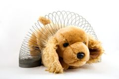 Slinky Puppy Stock Images