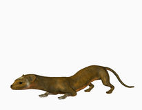 Slinky weasel Stock Images