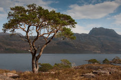 Slioch and Loch Maree Stock Image