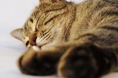 Sliping Cat Royalty Free Stock Photography