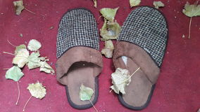 Slippers are in a foliage Royalty Free Stock Images
