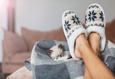 Free Slippers On Women`s Legs And Kitten Stock Photo - 195904890
