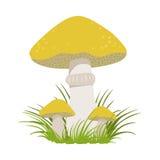 Slippery jack, suillus luteus, edible forest mushrooms. Colorful cartoon illustration Stock Photos