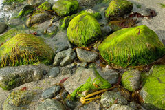 Slippery Shore Stones Royalty Free Stock Photography
