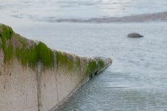 Slipway with seaweed Royalty Free Stock Image