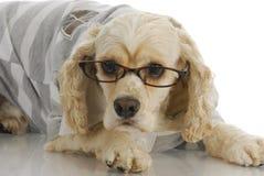 Slitage exponeringsglas för gullig hund royaltyfria bilder