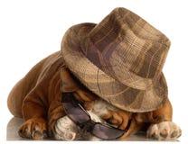 slitage för hundexponeringsglashatt royaltyfria bilder