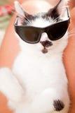 Slitage solglasögon för katt Royaltyfri Foto