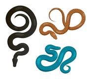 Slither Snakes Top View Vector Icons Set. Curved slither pythons or venomous snakes from top view set. Creeping black, blue and brown tropical python vector Royalty Free Stock Photo