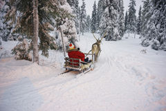 Slitta della renna di inverno che corre in Ruka in Lapponia in Finlandia Fotografia Stock Libera da Diritti