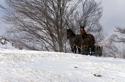 Slitta trainata da cavalli Immagini Stock