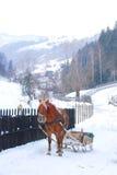 Slitta trainata da cavalli   Fotografia Stock