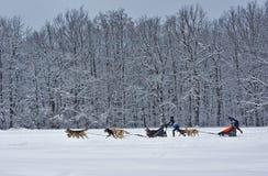Slitta trainata dai cani - aborigeno nordico dei camion d'annata ora si trasforma nello spo Fotografie Stock
