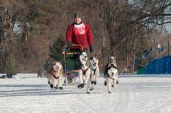 2014 slitta trainata dai cani Loppet - Don Deckert di Subaru Fotografia Stock Libera da Diritti