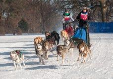 2014 slitta trainata dai cani Loppet - Melissa Domino & Sherry Johnson di Subaru Immagini Stock