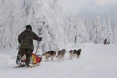 Slitta trainata dai cani sulla traccia di Sedivacek lunga Fotografia Stock