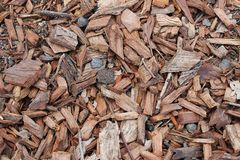 Sliver Texture. Texture of wood shavings, sliver royalty free stock images