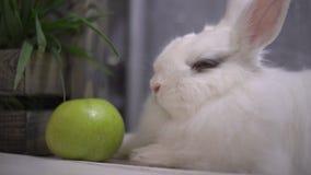 Slo-mo av en nyfiken kanin som skakar hans näsa arkivfilmer