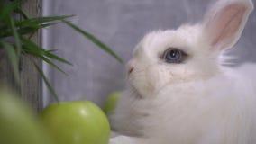 Slo-mo av en nyfiken kanin som skakar hans näsa stock video