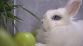 Slo-mo of a curious rabbit shaking his nose. And his law while breathing stock video