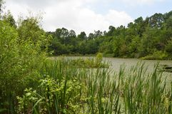 Sloan's Pond at Mammoth Cave Royalty Free Stock Photos