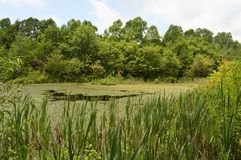 Sloan's Pond at Mammoth Cave Royalty Free Stock Photography