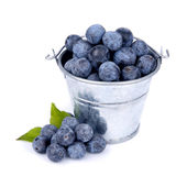 Sloe Stock Photos