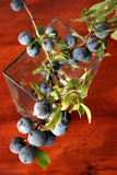 Sloe berries Royalty Free Stock Image