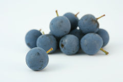 Sloe berries Blackthorn berry Stock Photos