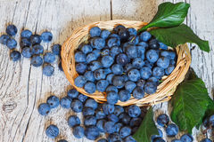 Sloe berries with leaves  closeup  in a wicker basket on a white. Blue berries blackthorn and leaves closeup in a wicker basket on a white wooden background Royalty Free Stock Image